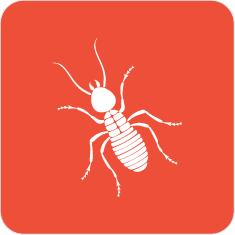 Termite Proof- It